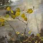 Eva Wilms - Natur - Skogsmålning